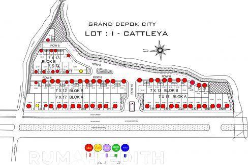 221020_Cattleya NEW